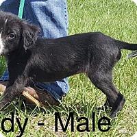Adopt A Pet :: Muddy - Waycross, GA