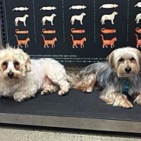 Adopt A Pet :: Shaggy & Spanky - N. Babylon, NY