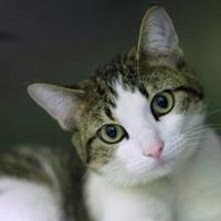 Adopt A Pet :: Maddie - Hilliard, OH