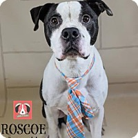 Adopt A Pet :: Roscoe - Lonely Heart - Gulfport, MS