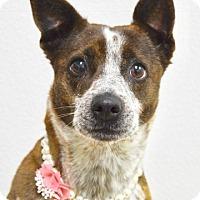 Adopt A Pet :: Emmy - Dublin, CA