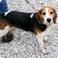 Adopt A Pet :: Jack - Country Boy - Rootstown, OH