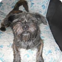 Adopt A Pet :: Chewy - dewey, AZ