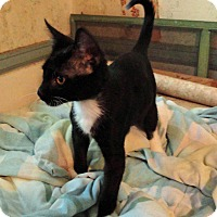 Adopt A Pet :: McGee - St. Johnsville, NY