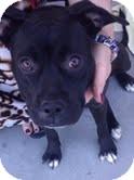 Boxer Mix Dog for adoption in Las Vegas, Nevada - Bonnie