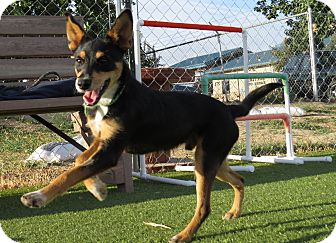 Manchester Terrier/Terrier (Unknown Type, Small) Mix Dog for adoption in Meridian, Idaho - Waco