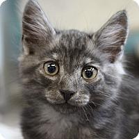 Adopt A Pet :: Wiggle - Sarasota, FL