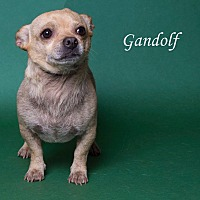 Adopt A Pet :: Gandalf - Riverside, CA
