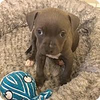 Adopt A Pet :: Pete - Savannah, GA