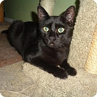 Adopt A Pet :: Milo - Breinigsville, PA