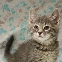Adopt A Pet :: Denver - Menominee, MI