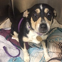 Adopt A Pet :: Penelope - Oak Ridge, NJ