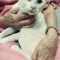 Adopt A Pet :: Diesel - Yorba Linda, CA