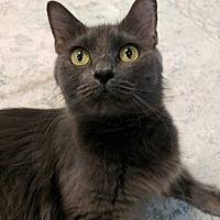 Adopt A Pet :: Matilda - Austintown, OH