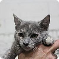 Adopt A Pet :: Curly sue - Santa Monica, CA
