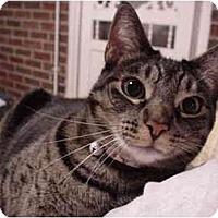 Adopt A Pet :: Rosie - Chesapeake, VA