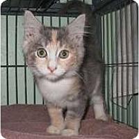 Adopt A Pet :: Cassie - Shelton, WA