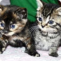 Adopt A Pet :: Rocket & Roxie - Xenia, OH