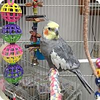 Adopt A Pet :: King - Lenexa, KS