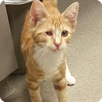 Adopt A Pet :: Jack Sparrow - Audubon, NJ
