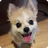 Adopt A Pet :: Tula - Salem, OR