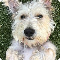 Adopt A Pet :: PENNY - Okatie, SC