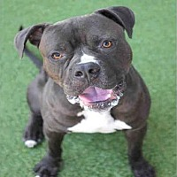 Adopt A Pet :: JETHRO - Los Angeles, CA