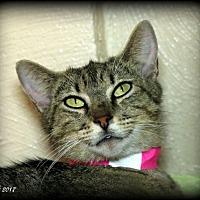 Adopt A Pet :: 70783  Trixie - Wetumpka, AL