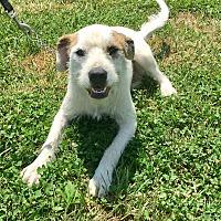Adopt A Pet :: Gaylord - Waldorf, MD