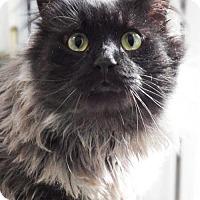 Adopt A Pet :: TAZ - Toledo, OH