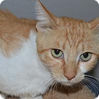 Adopt A Pet :: Dustin - Casa Grande, AZ