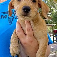 Adopt A Pet :: Georgia #6M - Osteen, FL