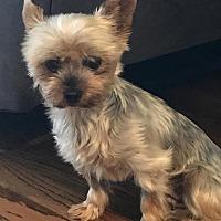 Adopt A Pet :: Bebe - Covina, CA
