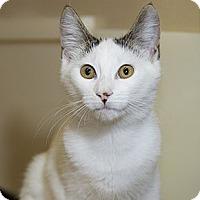 Adopt A Pet :: Vera - Farmingdale, NY
