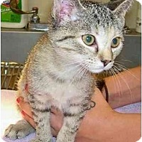 Adopt A Pet :: Oogly - Odenton, MD