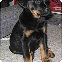 Adopt A Pet :: Rylee - Chandler, IN