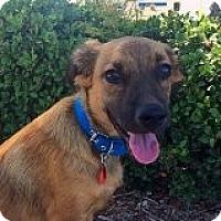 Adopt A Pet :: NELSON - Irvine, CA