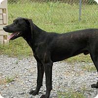Adopt A Pet :: Sam - Lewisville, IN