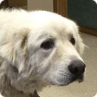 Adopt A Pet :: Jade - Bloomington, IL