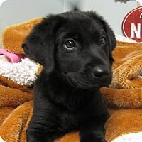 Adopt A Pet :: Bentley - South Dennis, MA
