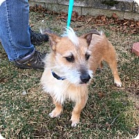 Adopt A Pet :: July is in Rhode Island! - Brattleboro, VT