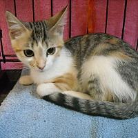 Adopt A Pet :: Sasha (& Oyster) - Arlington, VA