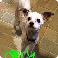Adopt A Pet :: Rory - Garden City, MI