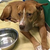 Adopt A Pet :: Millie - Suwanee, GA