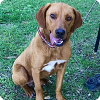 Adopt A Pet :: Kip - Glastonbury, CT