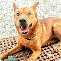 Adopt A Pet :: Bebe - pending - Apple Valley, CA
