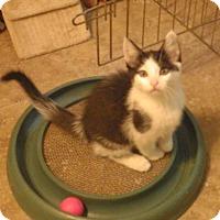 Adopt A Pet :: Starbuck - Quail Valley, CA