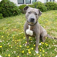Adopt A Pet :: BROOKS - McKinleyville, CA