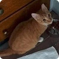Adopt A Pet :: Elena - Albany, NY