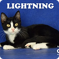 Adopt A Pet :: Lightening - Carencro, LA